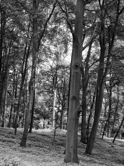 Black White Forest No 9081 Black White Ii Forest Image Gallery Berlintapete Individual Wallpaper On Demand Pictures More Wallpaper On Demand