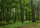 Forest • Image gallery • Berlintapete